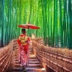 京都で既卒就職する方法
